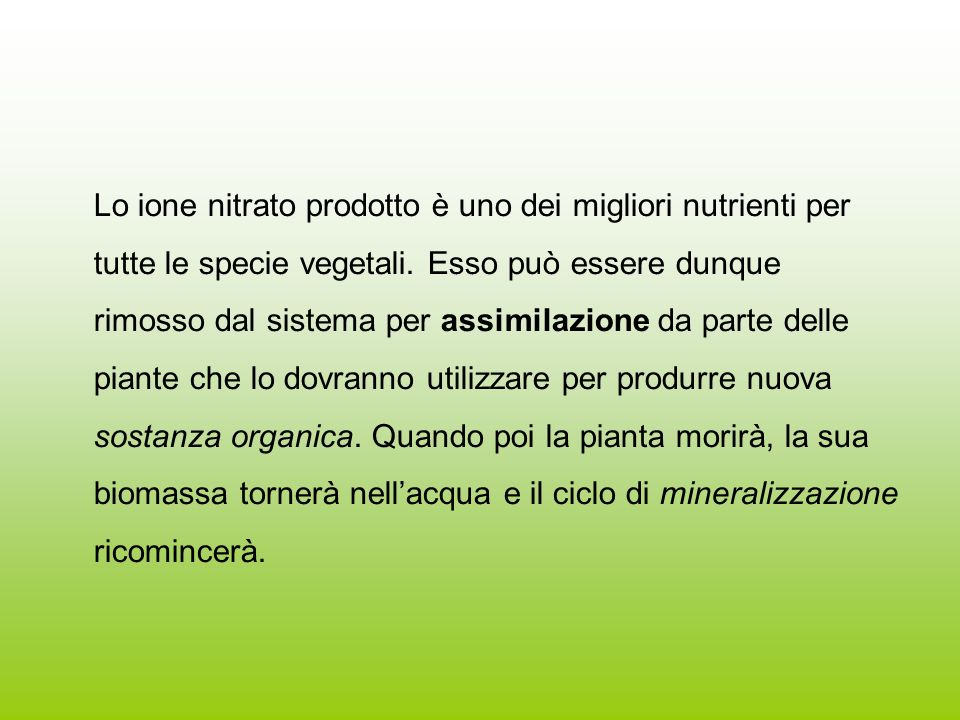 Lo ione nitrato prodotto è uno dei migliori nutrienti per tutte le specie vegetali.
