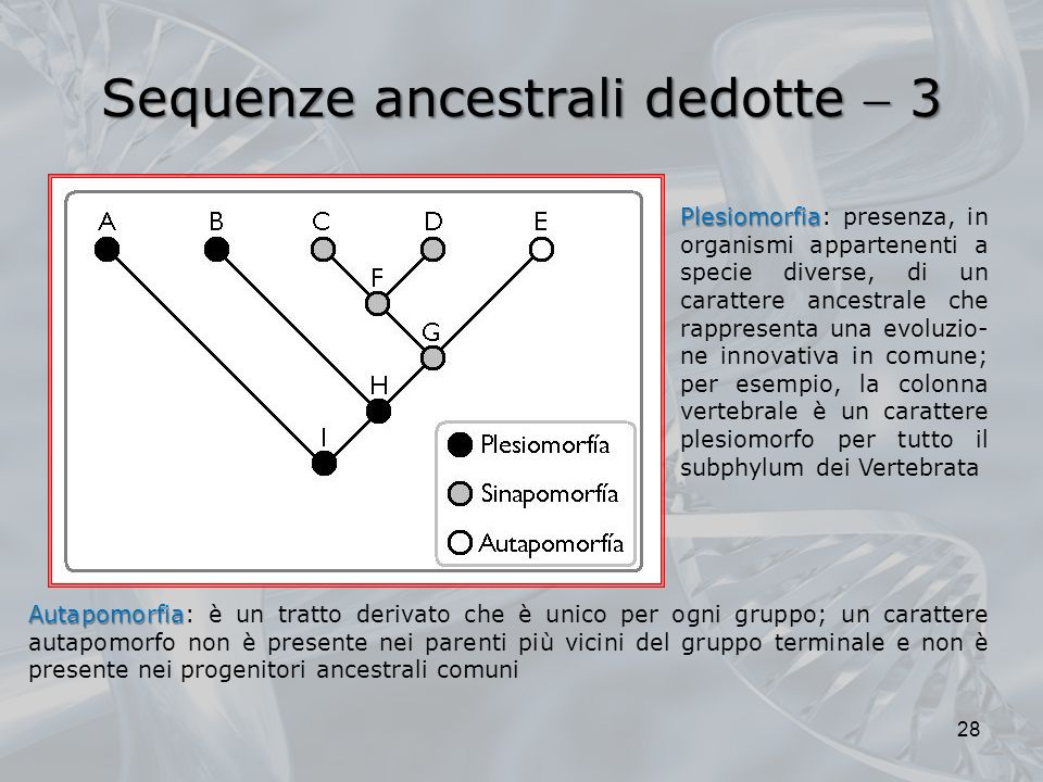 Sequenze ancestrali dedotte  3