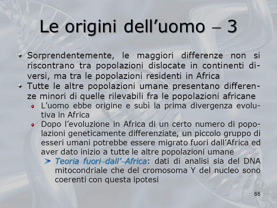 Le origini dell'uomo  3
