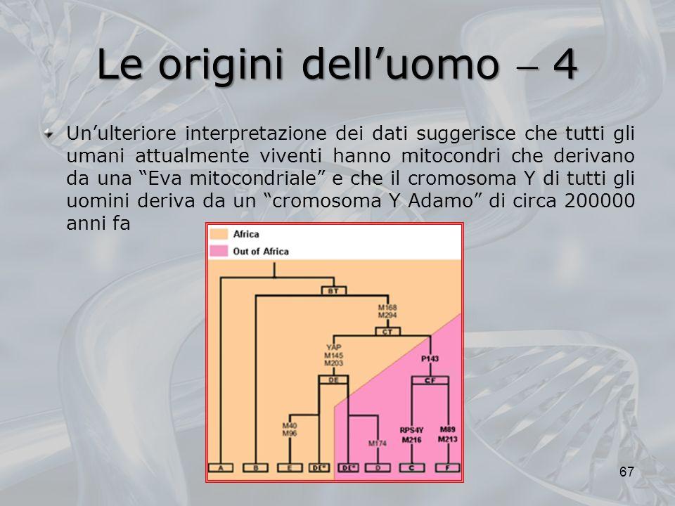 Le origini dell'uomo  4