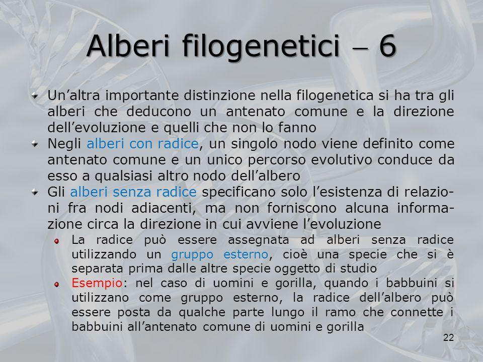 Alberi filogenetici  6