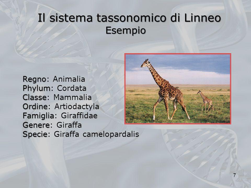 Il sistema tassonomico di Linneo Esempio
