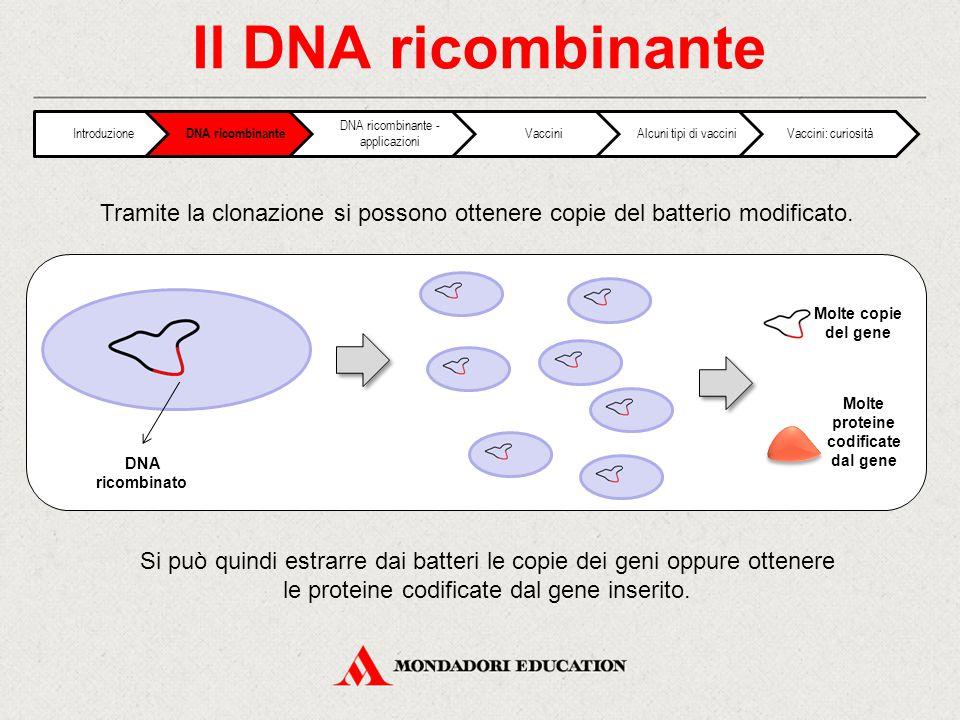 Molte proteine codificate dal gene