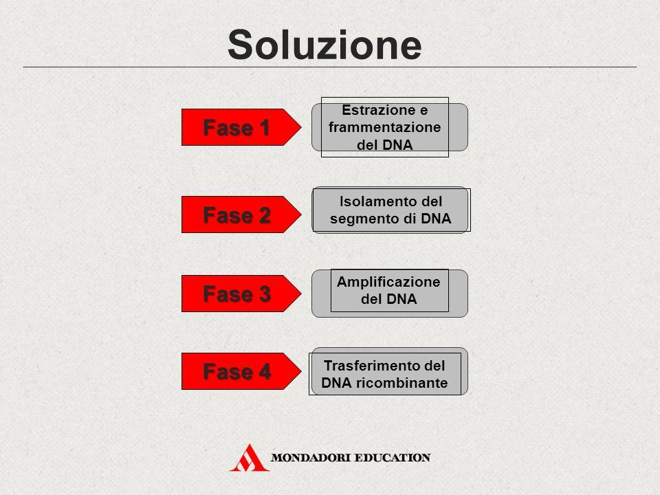Soluzione Fase 1 Fase 2 Fase 3 Fase 4