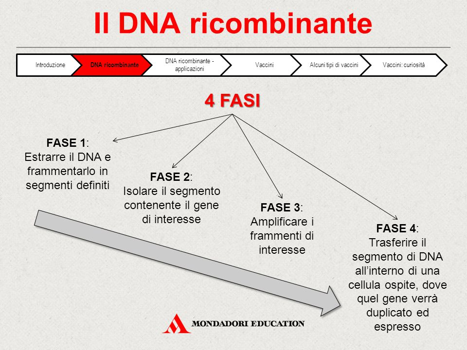 Il DNA ricombinante 4 FASI FASE 1: