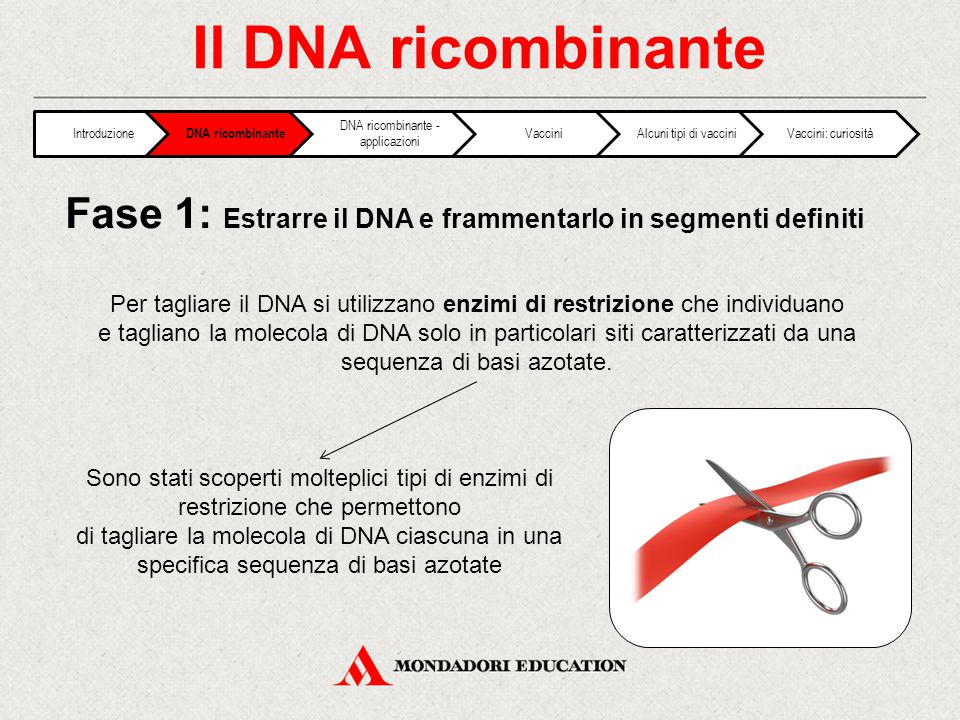 Fase 1: Estrarre il DNA e frammentarlo in segmenti definiti