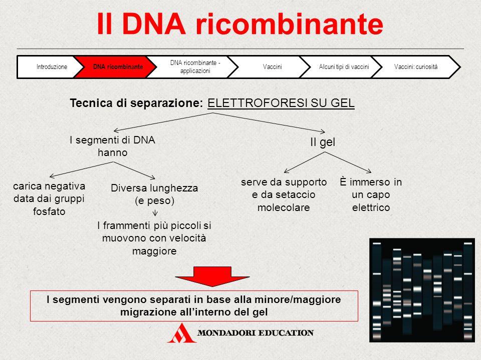 Il DNA ricombinante Tecnica di separazione: ELETTROFORESI SU GEL