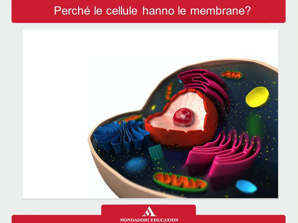 Perché le cellule hanno le membrane