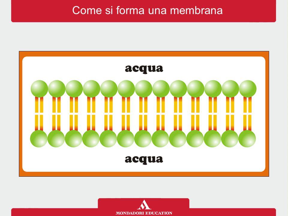 Come si forma una membrana