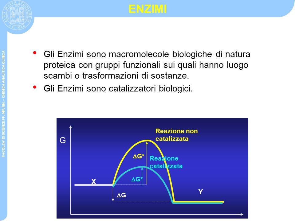 ENZIMI Gli Enzimi sono macromolecole biologiche di natura proteica con gruppi funzionali sui quali hanno luogo scambi o trasformazioni di sostanze.