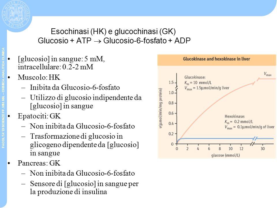 Esochinasi (HK) e glucochinasi (GK) Glucosio + ATP  Glucosio-6-fosfato + ADP