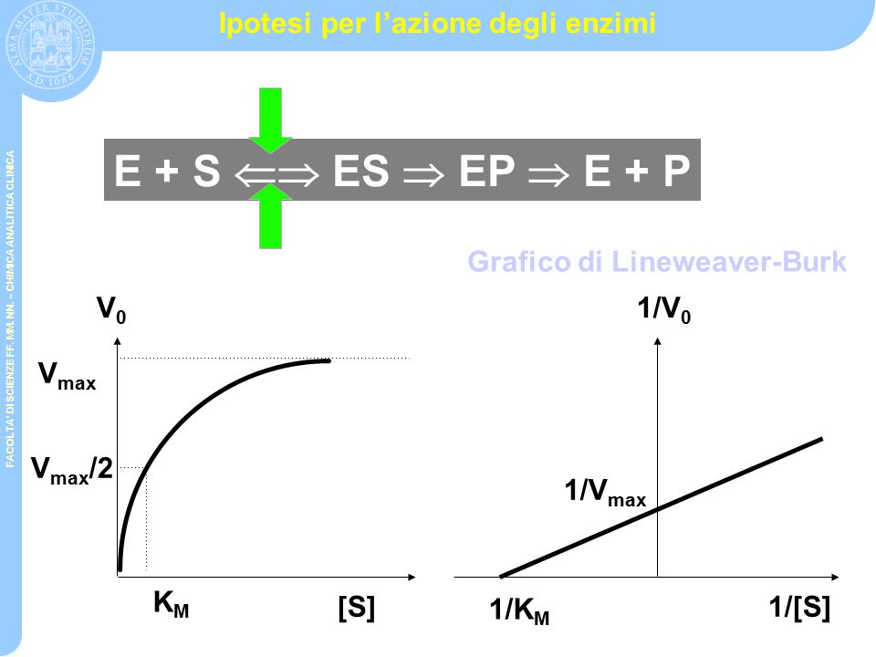 Ipotesi per l'azione degli enzimi