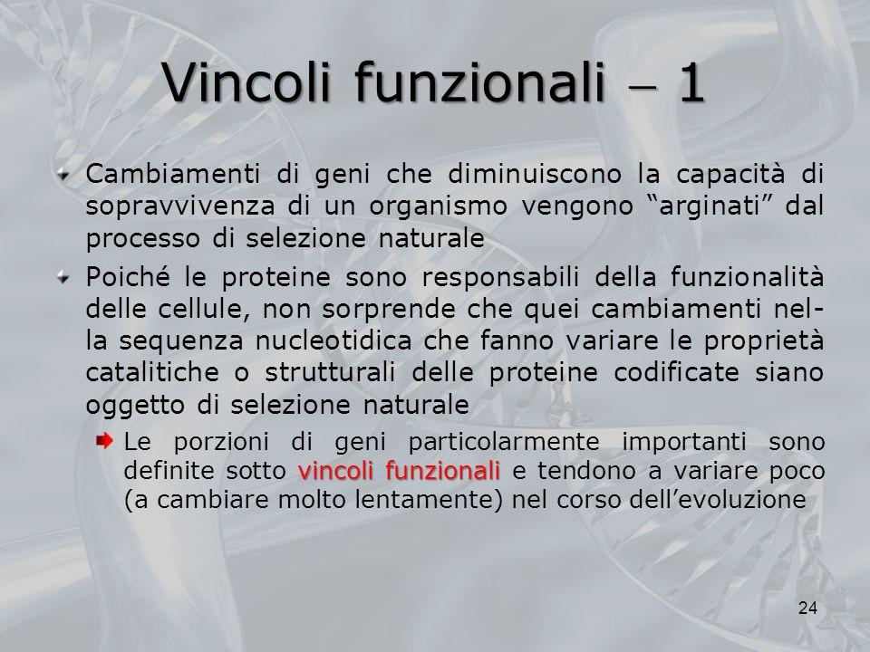 Vincoli funzionali  1