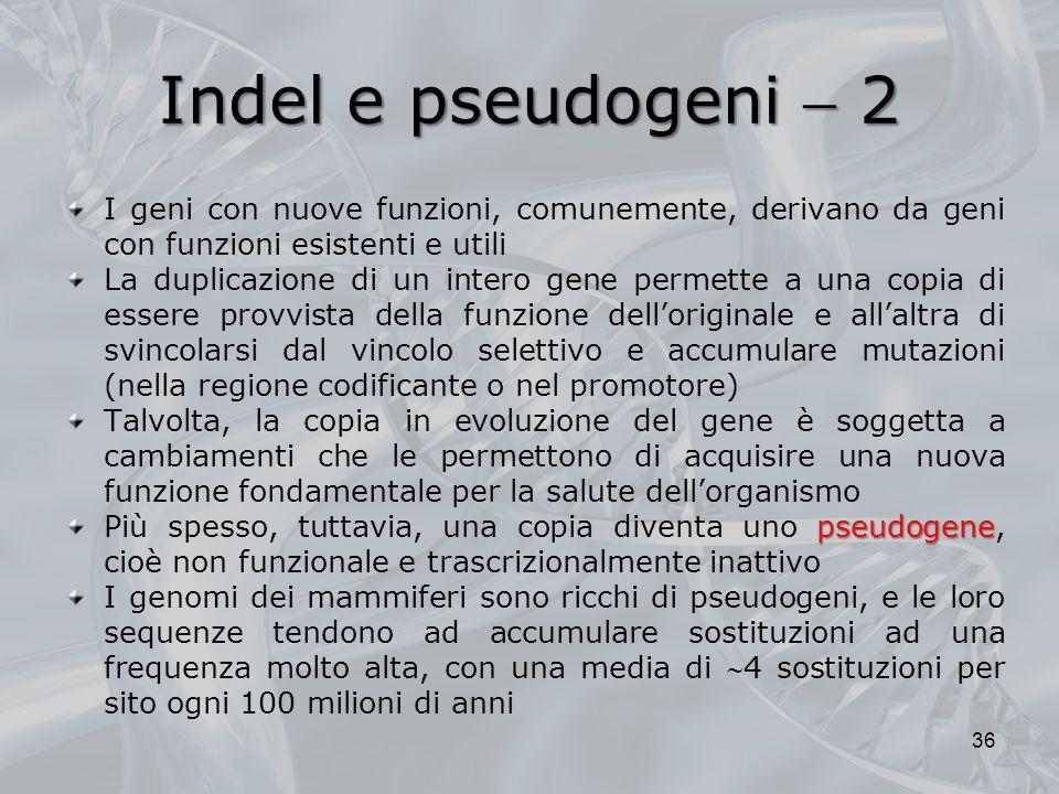 Indel e pseudogeni  2 I geni con nuove funzioni, comunemente, derivano da geni con funzioni esistenti e utili.