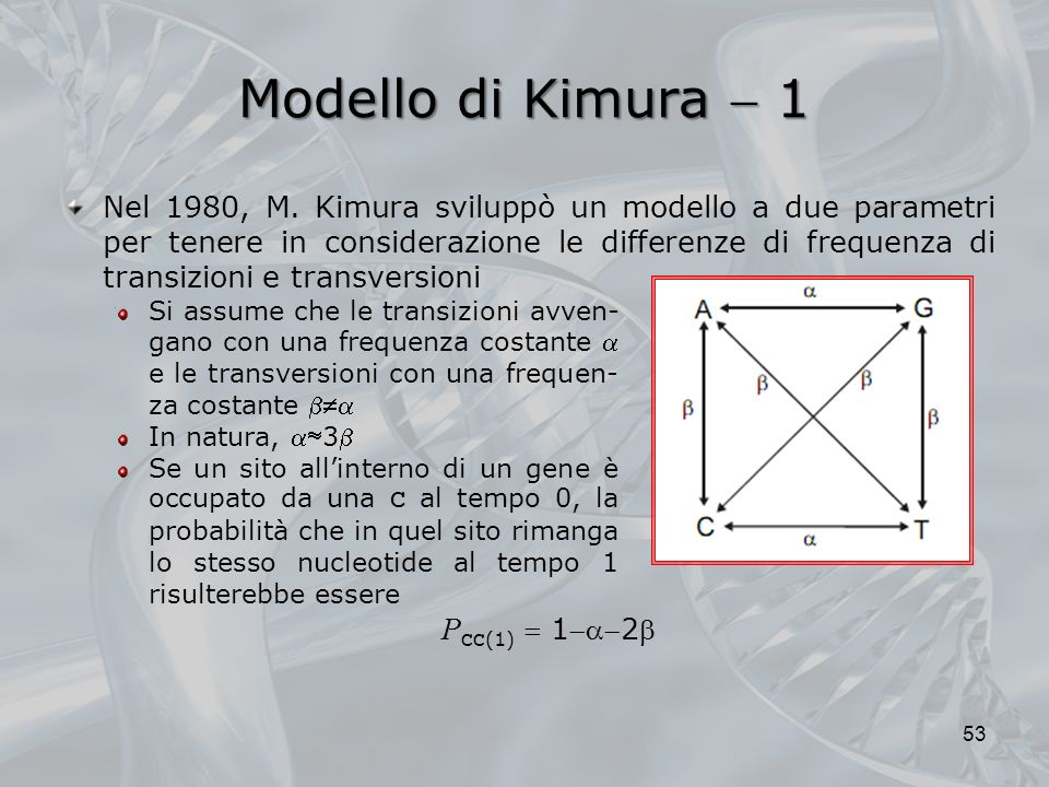 Modello di Kimura  1