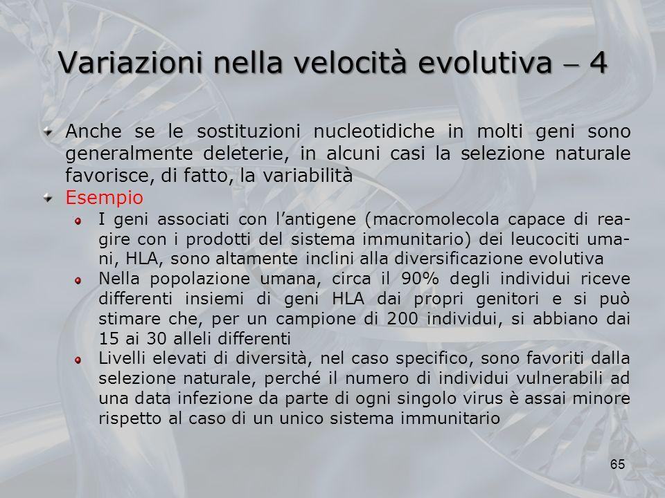 Variazioni nella velocità evolutiva  4