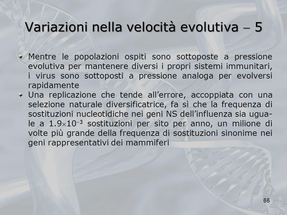 Variazioni nella velocità evolutiva  5