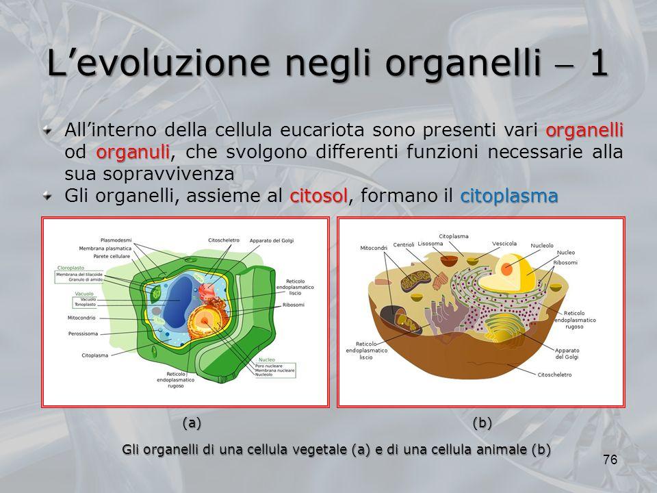 L'evoluzione negli organelli  1