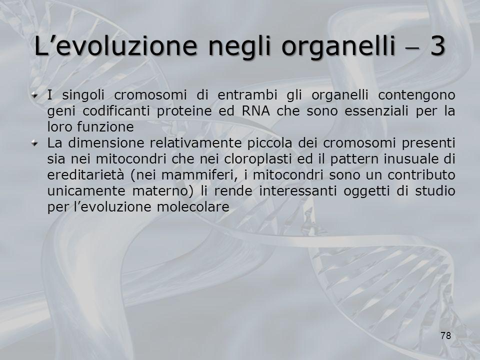 L'evoluzione negli organelli  3