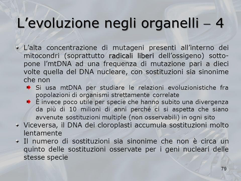 L'evoluzione negli organelli  4