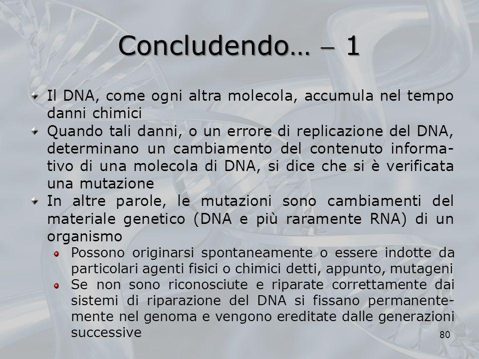 Concludendo…  1 Il DNA, come ogni altra molecola, accumula nel tempo danni chimici.