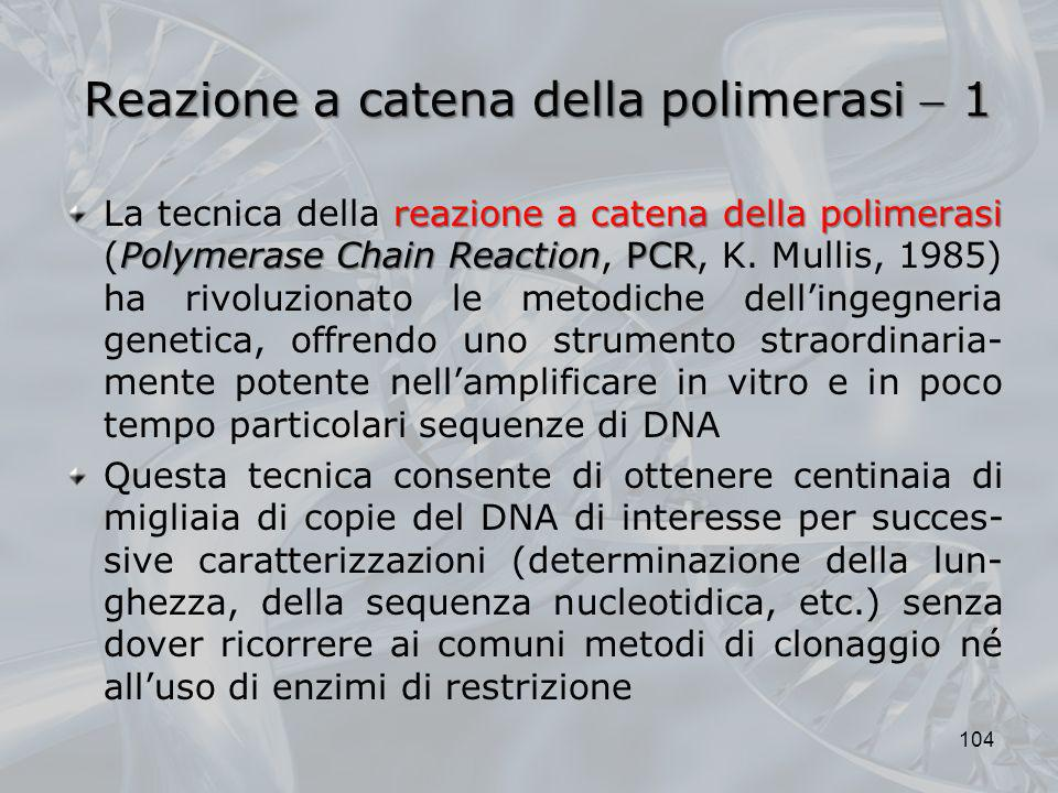 Reazione a catena della polimerasi  1
