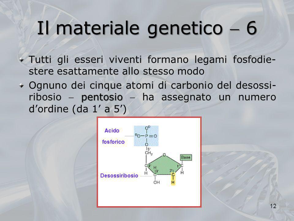 Il materiale genetico  6