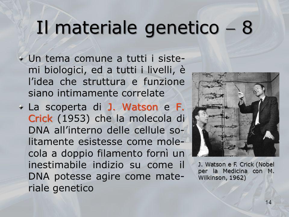 Il materiale genetico  8