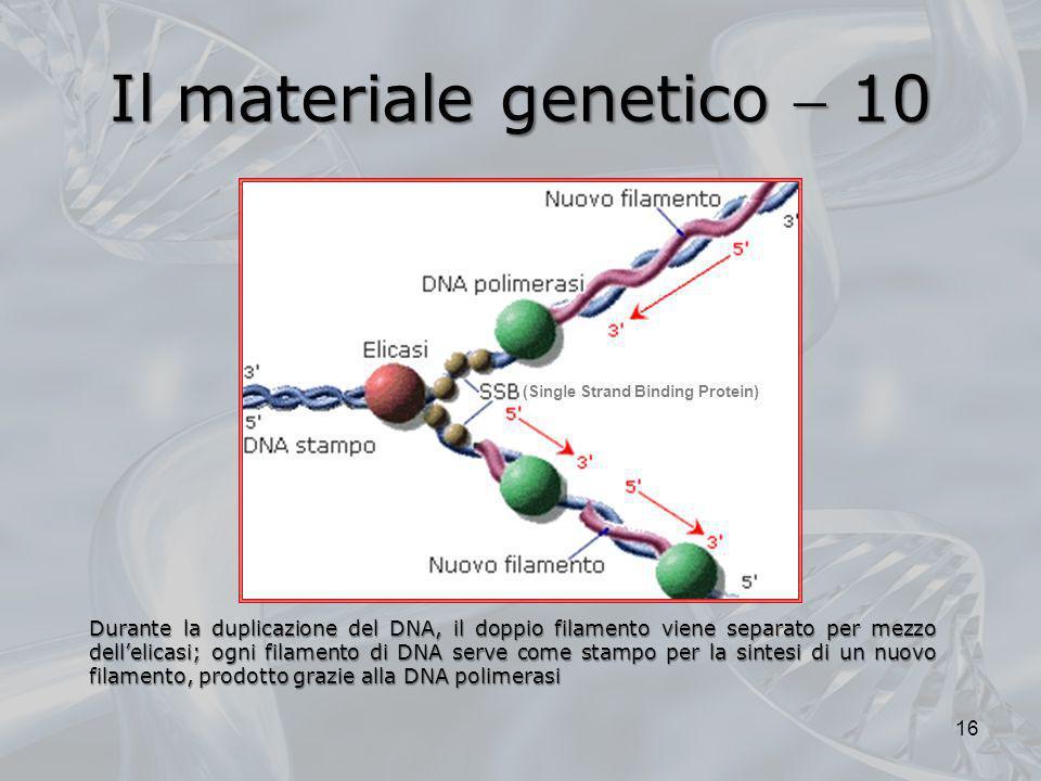 Il materiale genetico  10