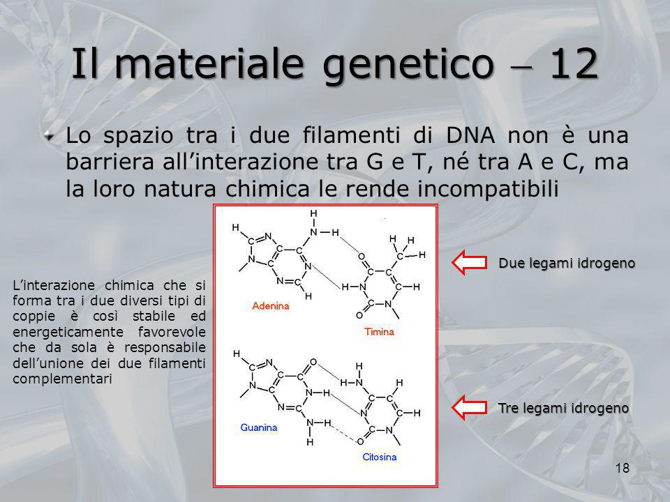 Il materiale genetico  12