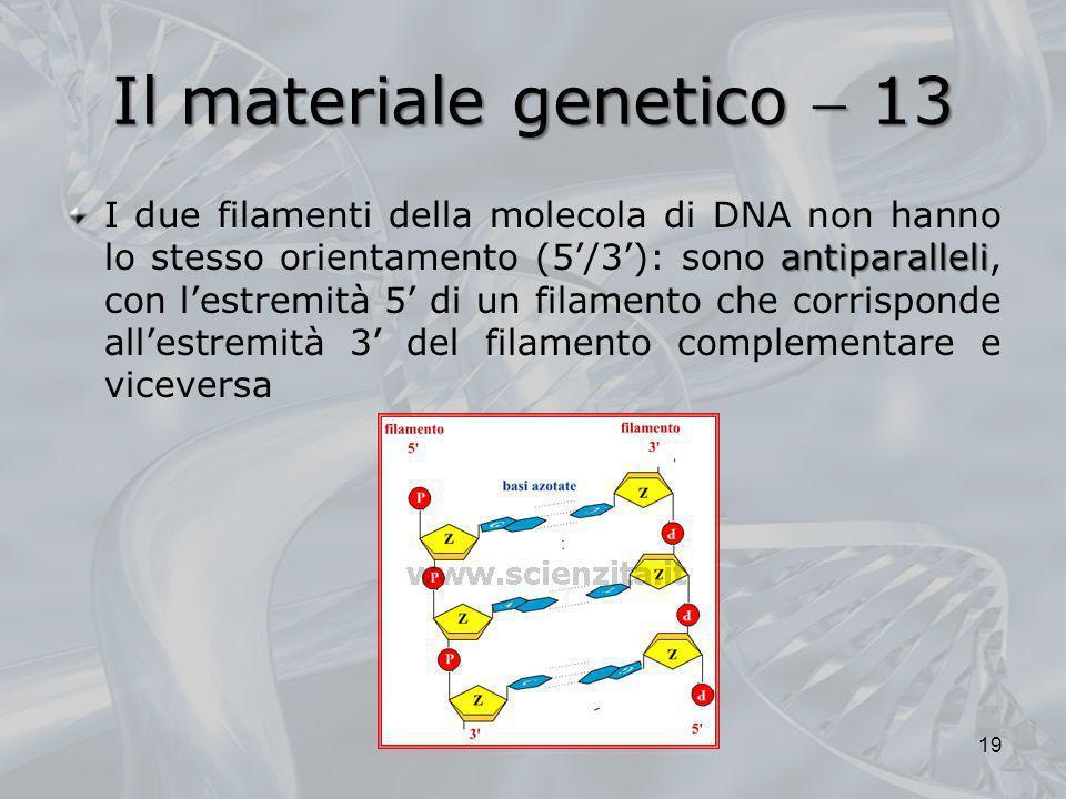 Il materiale genetico  13