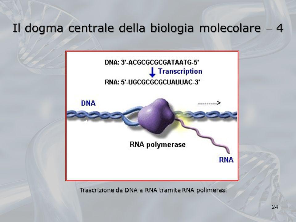 Il dogma centrale della biologia molecolare  4