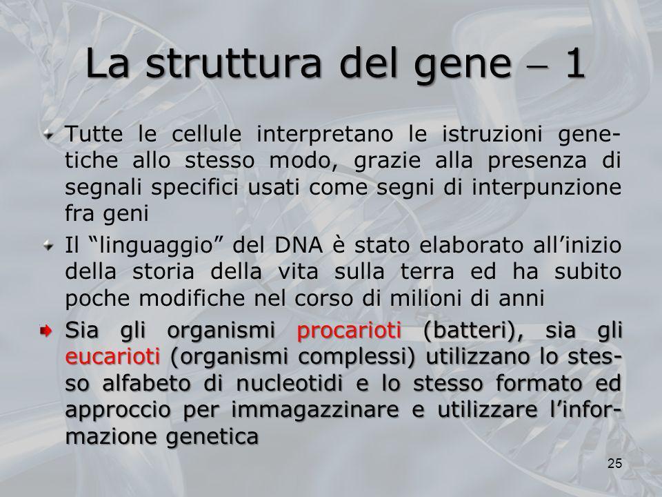 La struttura del gene  1