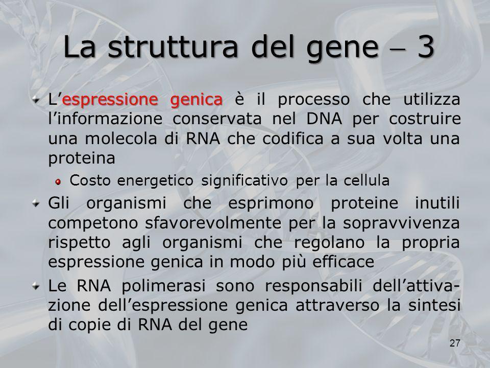 La struttura del gene  3
