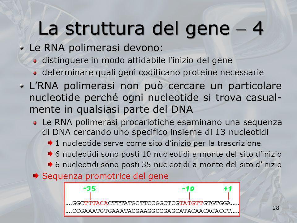 La struttura del gene  4 Le RNA polimerasi devono: