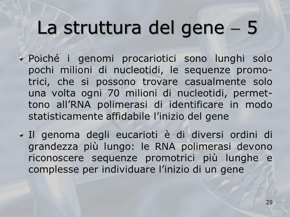 La struttura del gene  5