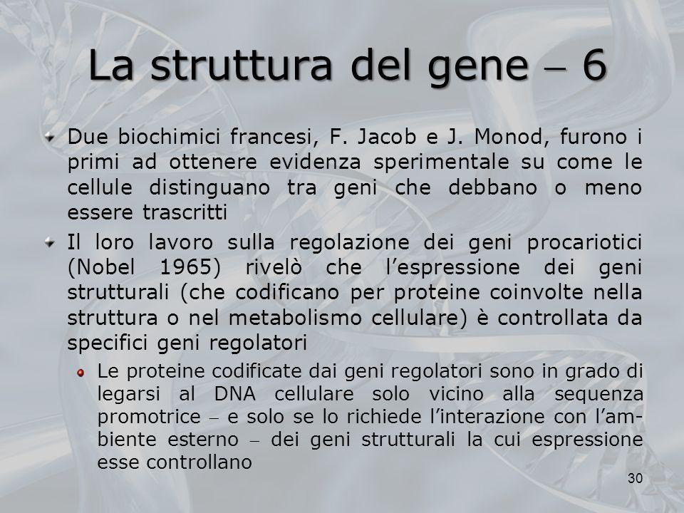 La struttura del gene  6