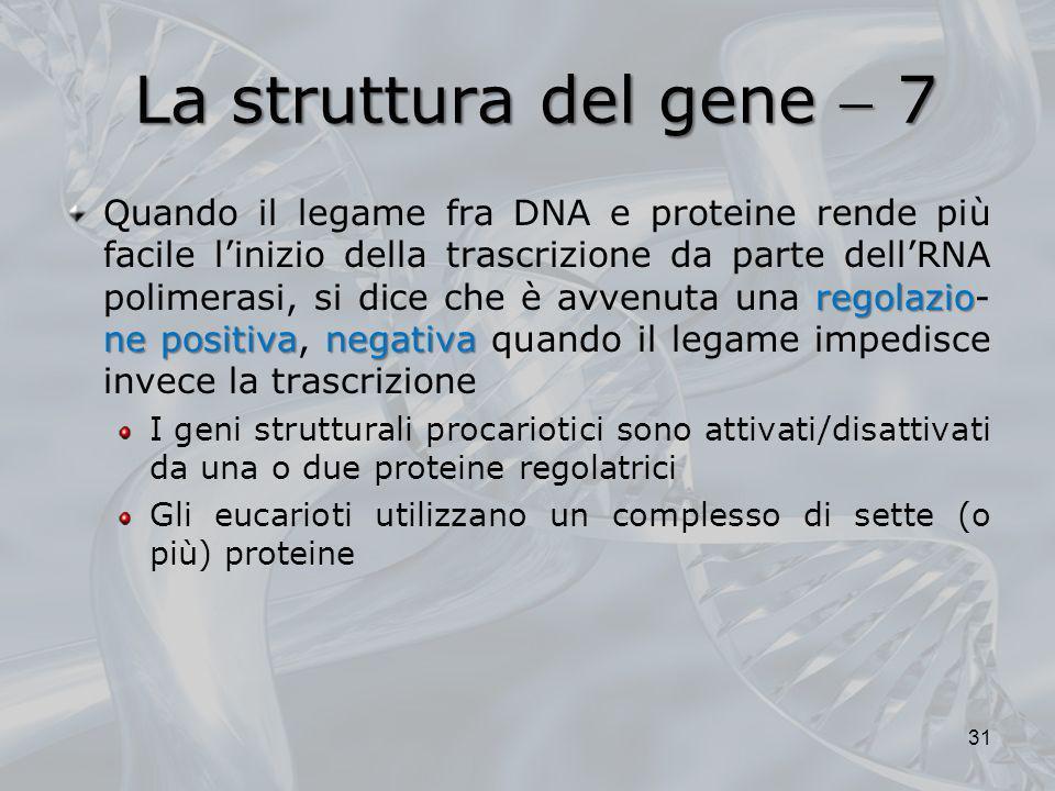 La struttura del gene  7
