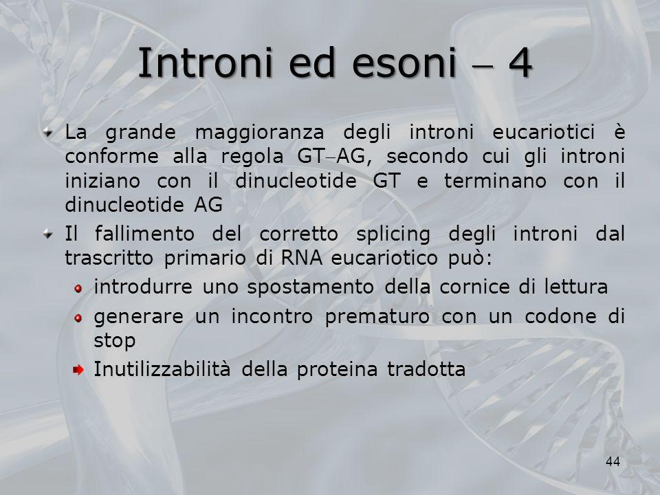 Introni ed esoni  4