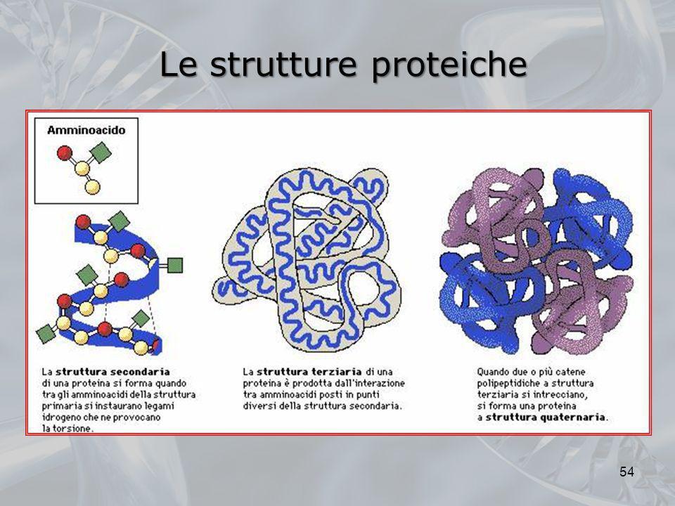 Le strutture proteiche