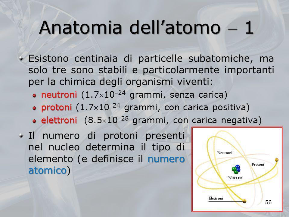 Anatomia dell'atomo  1