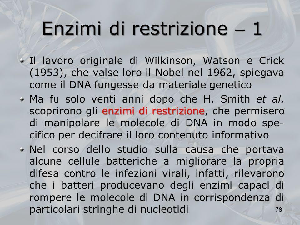 Enzimi di restrizione  1