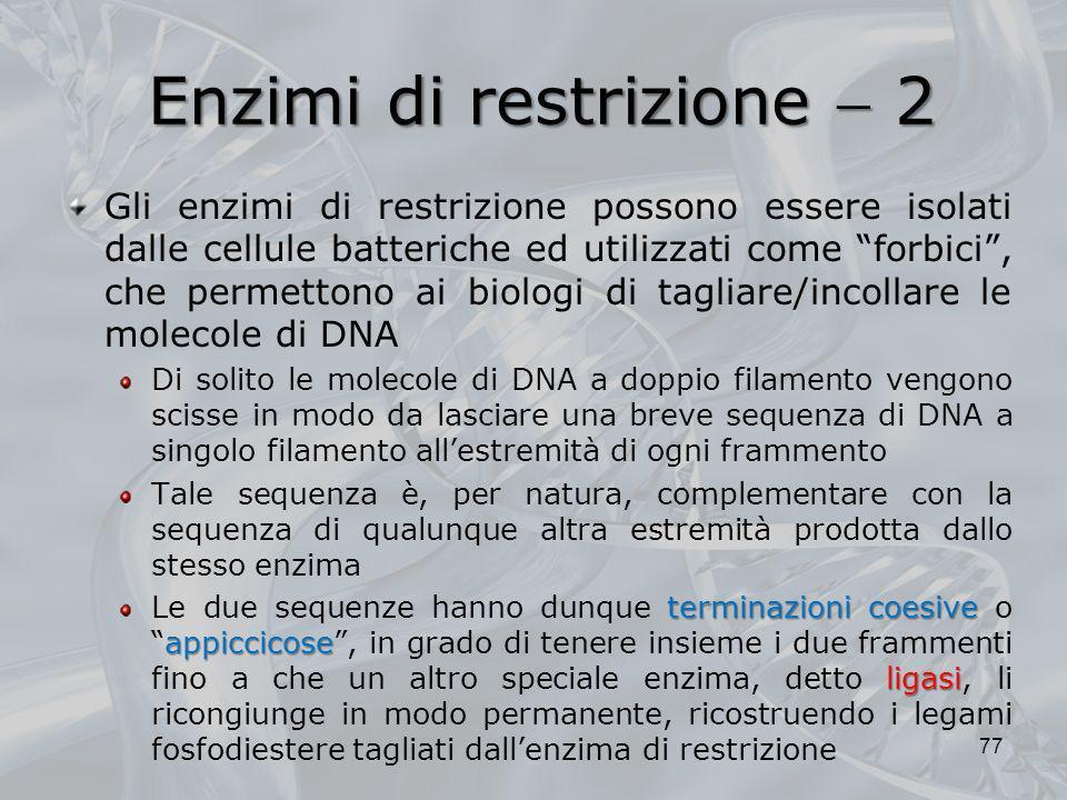 Enzimi di restrizione  2