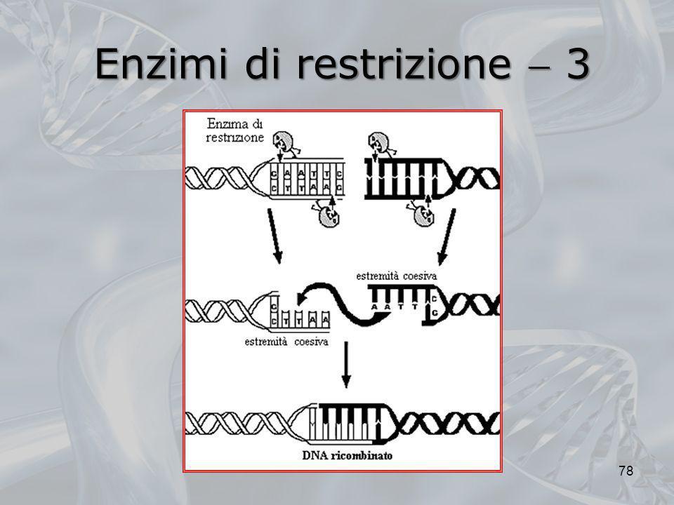 Enzimi di restrizione  3