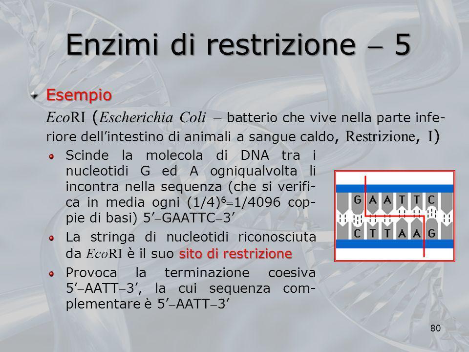 Enzimi di restrizione  5