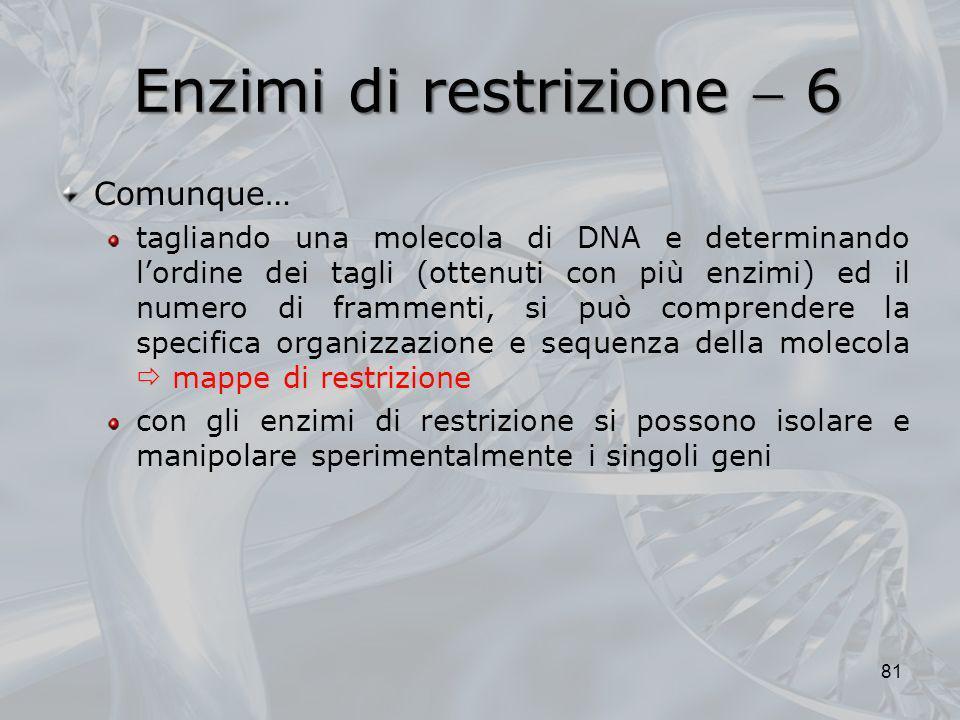 Enzimi di restrizione  6