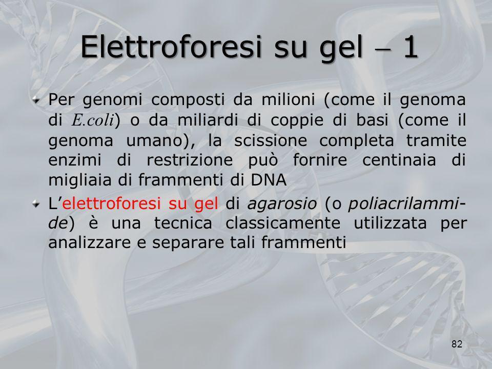 Elettroforesi su gel  1