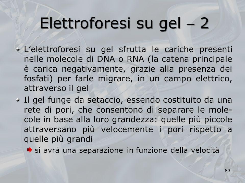 Elettroforesi su gel  2
