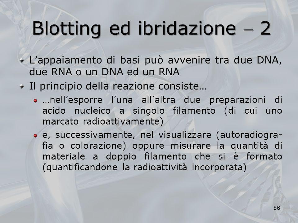 Blotting ed ibridazione  2