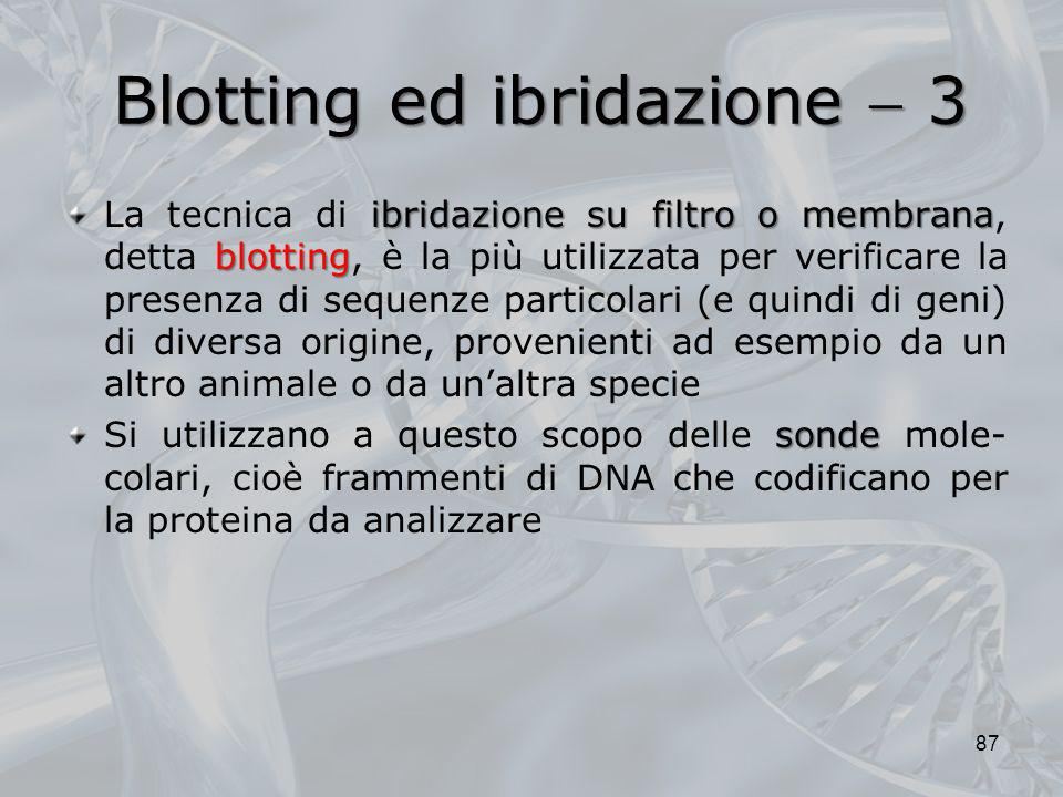 Blotting ed ibridazione  3